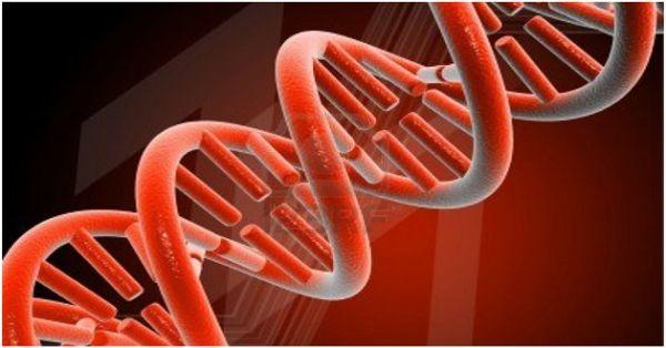 Konoplja popravlja oštećenu DNK?