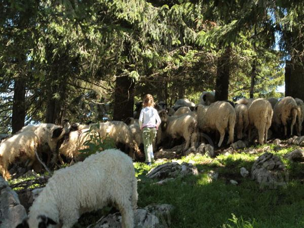 Porodica Fuško živi na vrhu planine Vlašić (4)