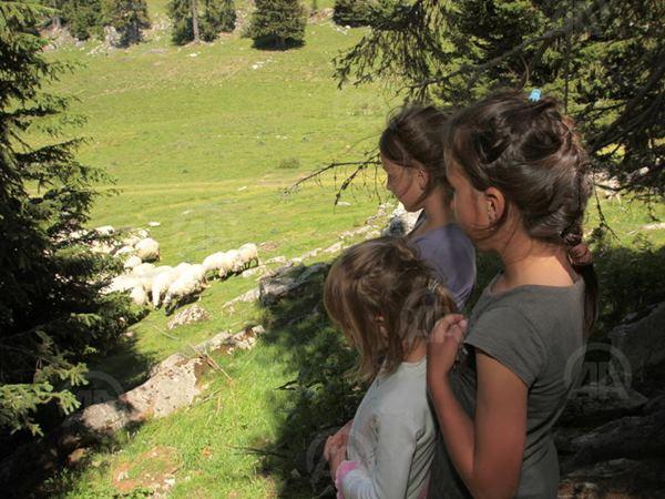 Porodica Fuško živi na vrhu planine Vlašić