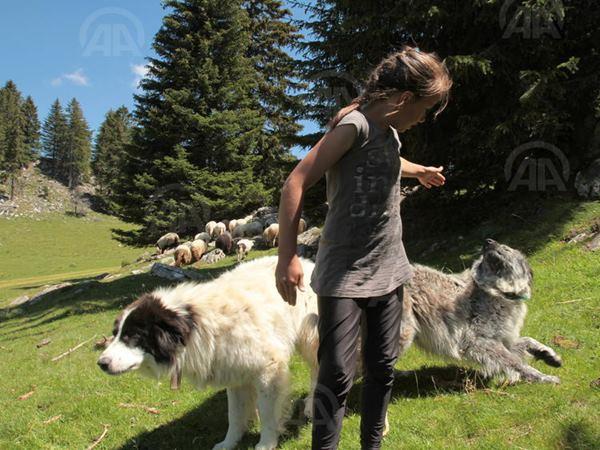 Porodica Fuško živi na vrhu planine Vlašić (3)