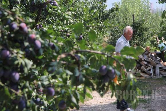Mustafa Imširović: Gdje god možeš voćku posadi