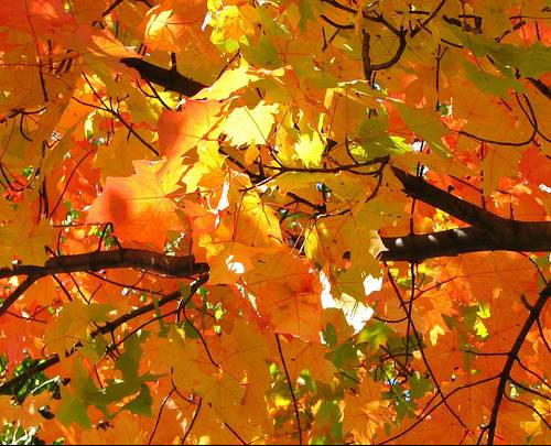 Danas počinje jesen