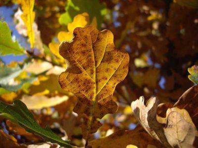 Kolorit jeseni nadomak Sarajeva