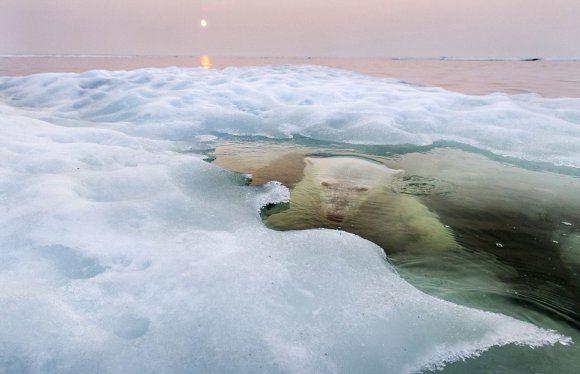 National Geographic: Najbolja fotografija u 2013.