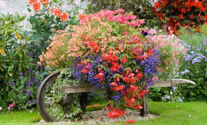 Uticaj boja cvijeća iz vaše bašte