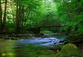 Širom Svijeta Danas Se Obilježava Svjetski Dan Šuma