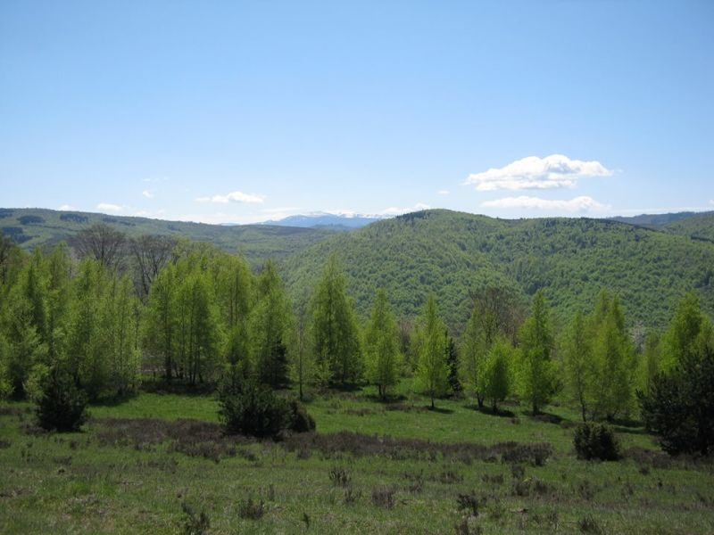 Od Rostova do Kalina rijetko viđena ljepota prirode
