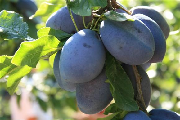 Voće i povrće je izvor velikog broja vitamina
