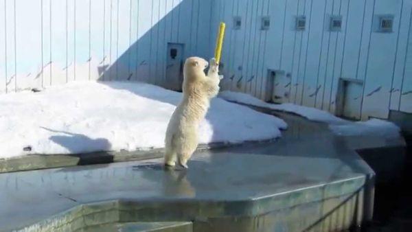 Ovo Je Najsretniji Polarni Medvjed Kog Ćete Ikada Vidjeti