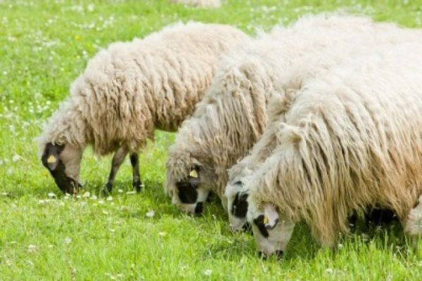 Poljoprivrednik iz Bugojna: Kada se trudite i jako želite to što hoćete, onda vam se želja i ostvari