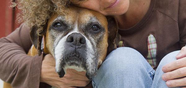 Uticaj psa kao kućnog ljubimca na poboljšanje vašeg zdravlja